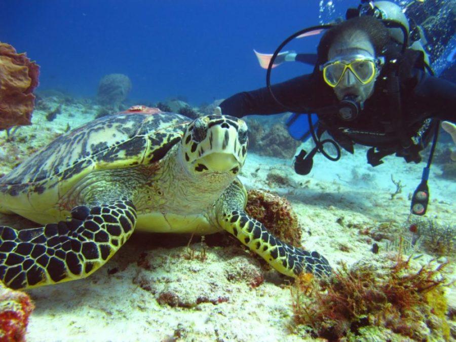 Купить тур в Тайланд. Дайвинг и уникальный подводный мир
