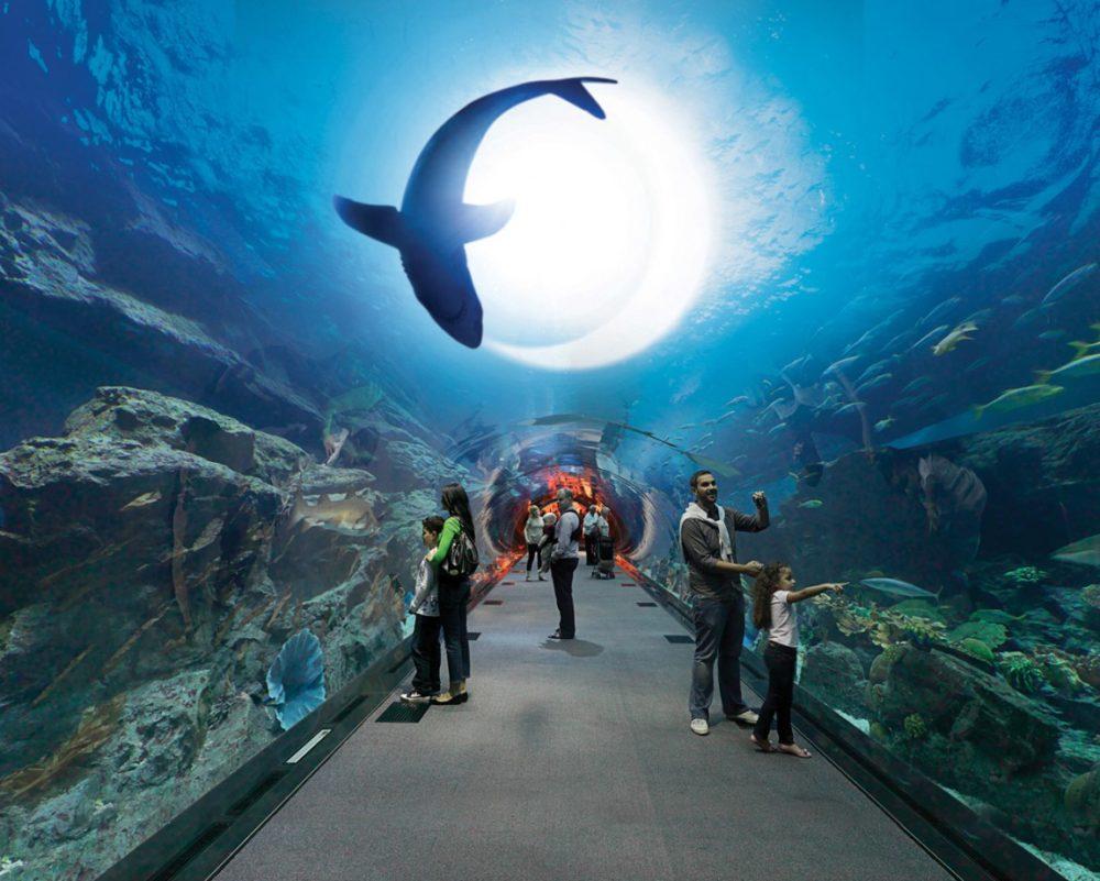 Туры в ОАЭ. Экскурсия в аквариум