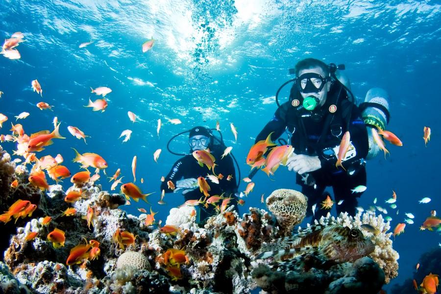 Купить тур в Египет - морские погружения
